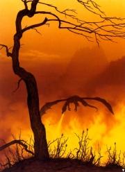Feuerdrache aus dem großen Buch des Drachen