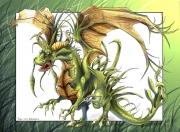 Hide inthe gras dragon